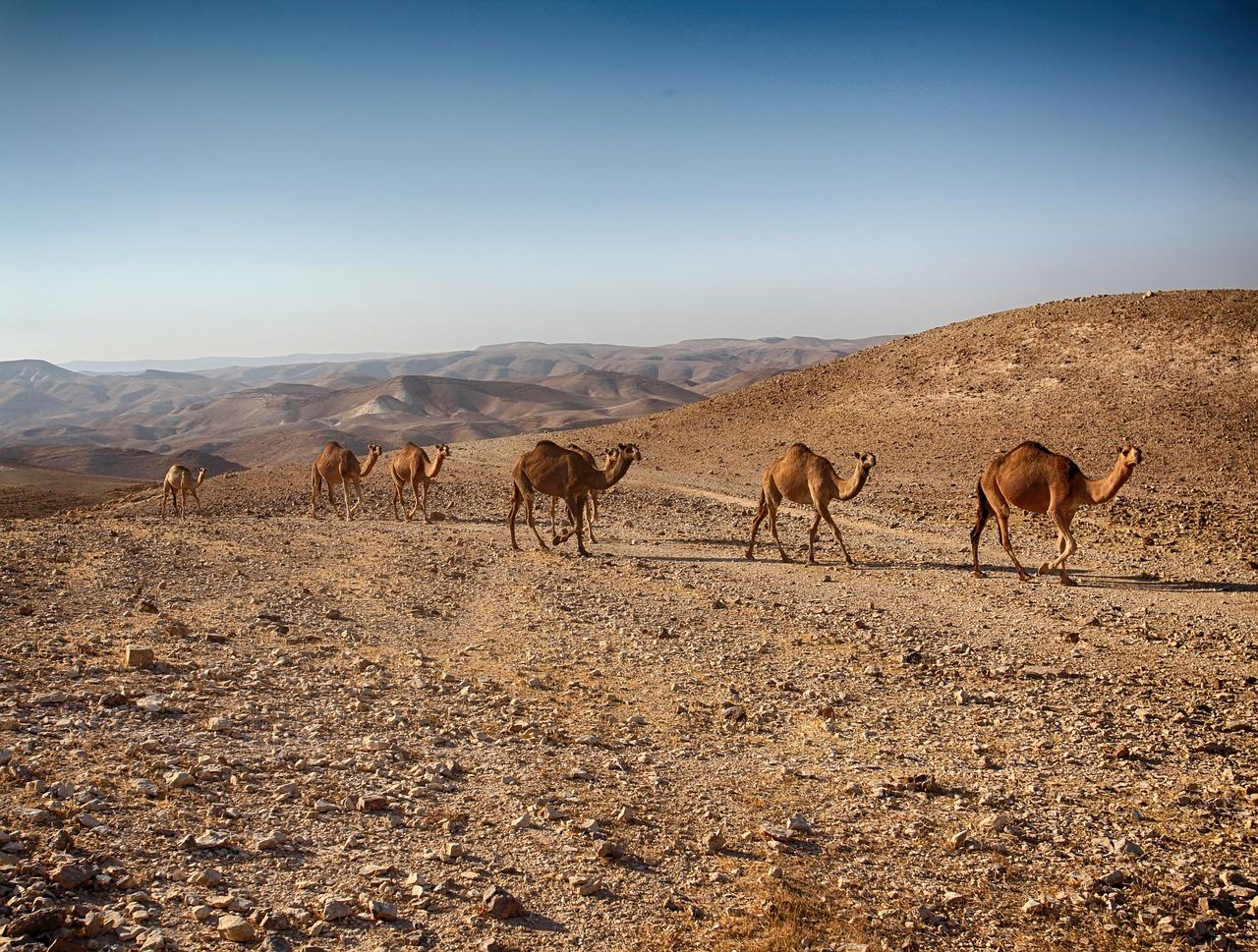 המדריך המלא לשביל ישראל